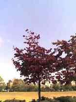 備後(びんご)の秋