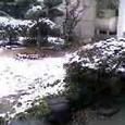 アァ! 雪だ!