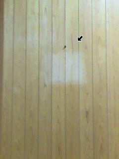 虫がおるぅ  老人ホーム編